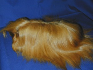 Peruvian Satin Guinea Pig breed